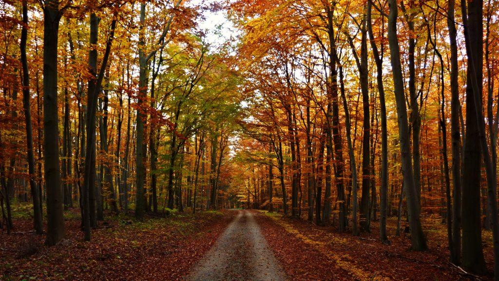 Get ready for fall with RedEye's autumn playlist