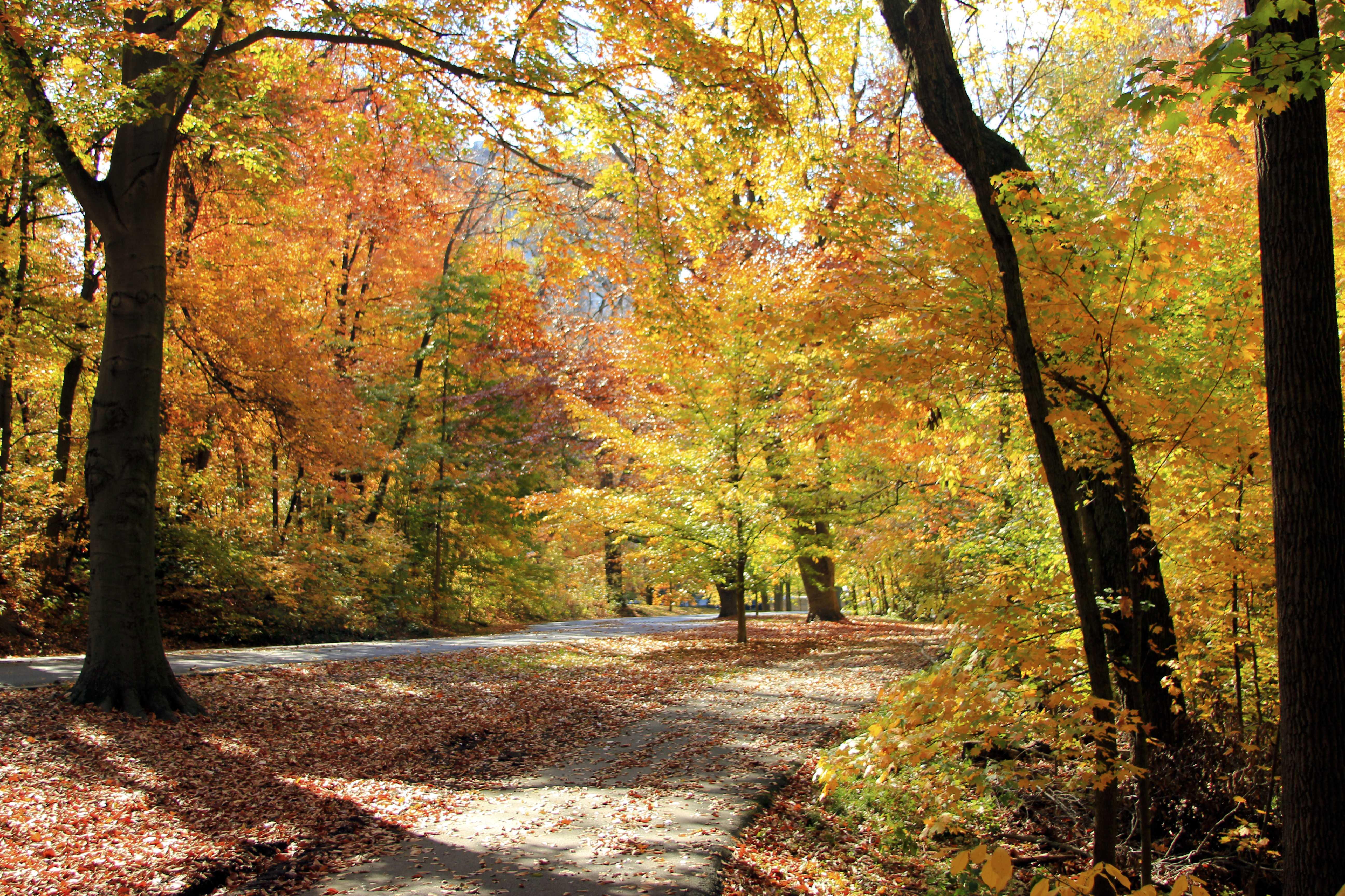 Fall break festivities for Manual students