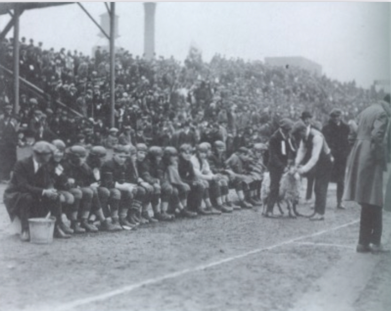 Players+sit+on+the+sideline+with+the+ram+at+the+1921+game.+Photo+from+the+UofL+photo+archives.+