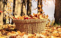 Fall October Basket Seasonal Autumn Thanksgiving