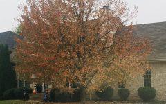 STAFF EDITORIAL: RedEye's favorite fall memories